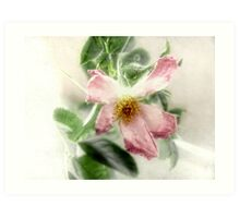 After the Storm - Wild Rose Art Print