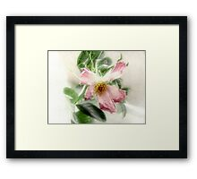 After the Storm - Wild Rose Framed Print