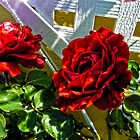 Rose with Lattice by GolemAura