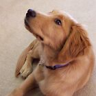 Moments With A Golden Retriever by Marie Sharp