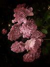 An Abundance of Roses by LouiseK