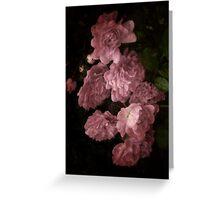 An Abundance of Roses Greeting Card