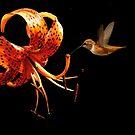 HUMMINGBIRD CALENDAR by RoseMarie747