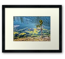 New mangrove in azure ocean Framed Print
