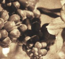 Muscari & Daffodils Sticker