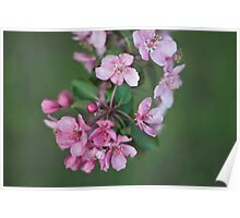 Blossom Bunches Poster