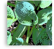 Brim Cup Hosta Canvas Print