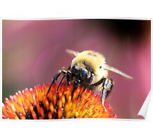 Fuzzy bee Poster