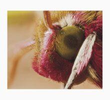 Elephant Hawk moth eye Extreme macro One Piece - Short Sleeve
