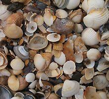Seashells on the sea shore by KMorral