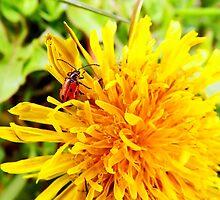 Lady bug by fita