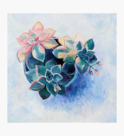 Pastel Succulents - an oil painting on canvas Photographic Print