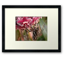 Just a little closer ... Framed Print