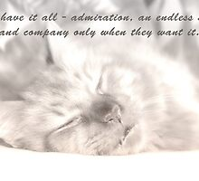 Cats have it all. by Heather Allen