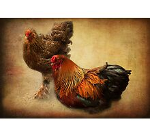 Rooster and hen Photographic Print