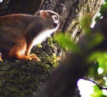 Squirrel Monkey Sticker