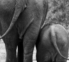 Elephant Backsides Sticker