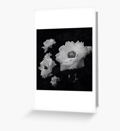 Black and White Flowers Greeting Card