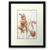 Wild Indian Rice in Autumn Framed Print