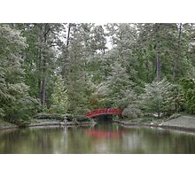 Pond Of Green Trees  Photographic Print