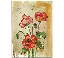 Red Poppies Photographic Print