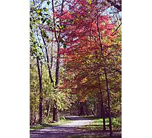 Red Tree on Path II Photographic Print