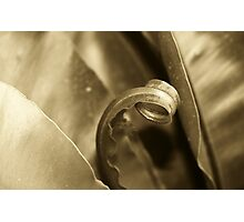 Bronze fronds Photographic Print
