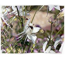 Bumble bee on pretty flower Poster