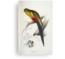 Beautiful Blacktailed Parrot Print Metal Print