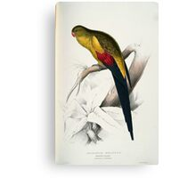 Beautiful Blacktailed Parrot Print Canvas Print