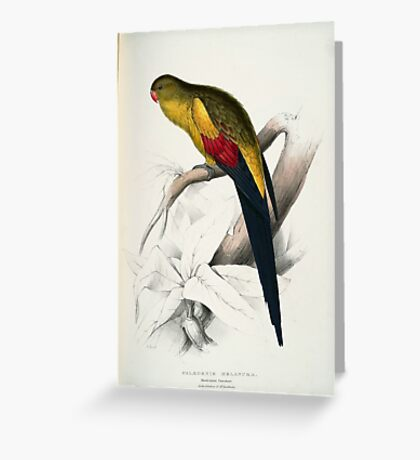 Beautiful Blacktailed Parrot Print Greeting Card