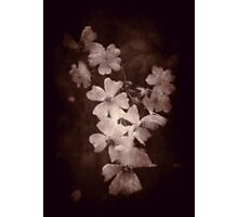 Where the wild roses grow ... Photographic Print