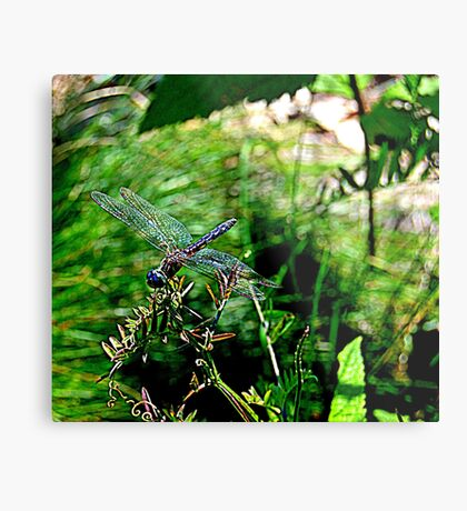 Dragonfly Shows Off Metal Print