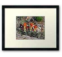 The Feather Framed Print