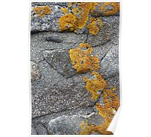 Lichen Covered Fence Post 1 Poster