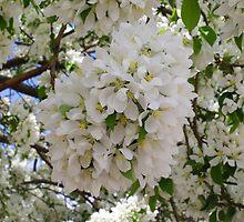 Spring Snow Crabapple by Gary Benson