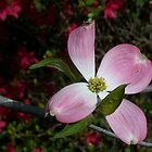Pretty in Pink 2 by WalnutHill