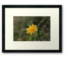 Common golden thistle (Scolymus hispanicus) Framed Print