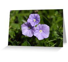 Blue rock bindweed (Convolvulus sabatius) Greeting Card
