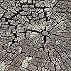 Crumbling Stump © by Ethna Gillespie
