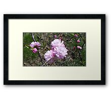 Almost Almond... II Framed Print