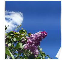 Lovely Lilac 3 Poster