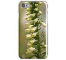 Straw foxglove (Digitalis lutea ssp australis) iPhone Case/Skin