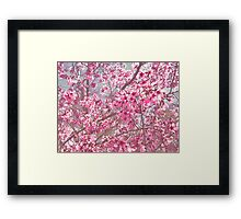 So Much Pink! Framed Print