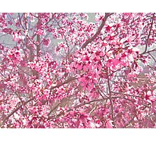 So Much Pink! Photographic Print