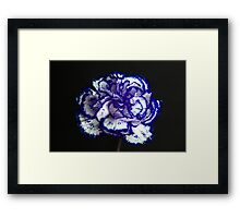Carnation Portrait 2 Framed Print