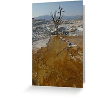 Mammoth Hot Springs, YNP Greeting Card
