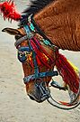 Indian Horse by lamiel