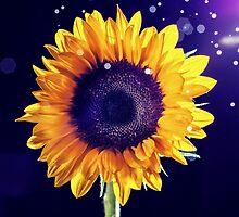Sunflower by Carl Walker