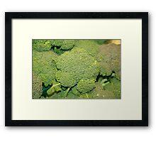 Broccoli Bag Framed Print